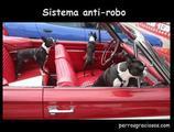 perros sistema anti robo